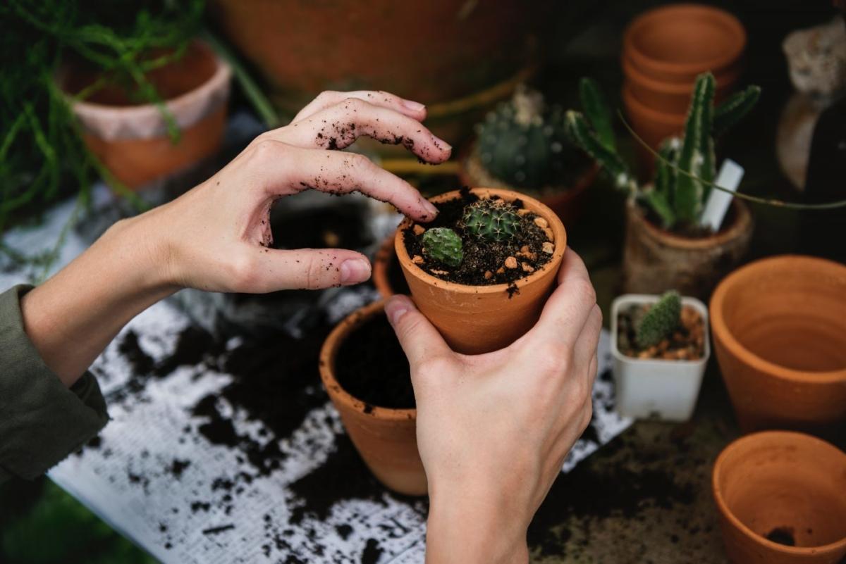 Κηπουρική, μια ενδιαφέρουσα και δημιουργική ασχολία