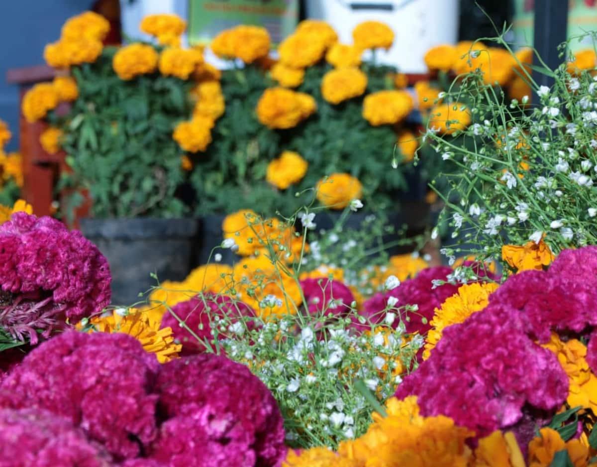 Ξεκινάει (ξανά) η έκθεση λουλουδιών στη Βάρκιζα